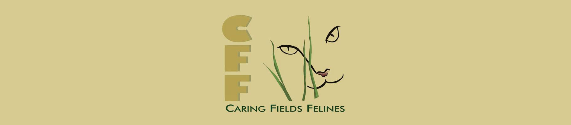 Caring Fields Felines – Local Charity Spotlight